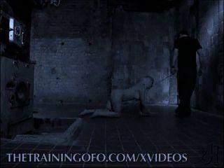 تدريب الرقيق
