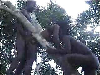 حقيقي الأفريقية هواة اللعنة على جزء شجرة 2