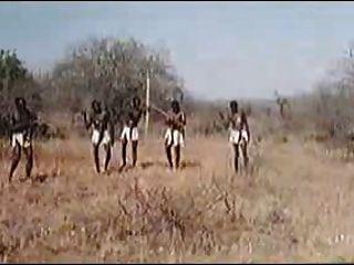 قضبان هائلة الأفريقية! سفاري الحقيقي!