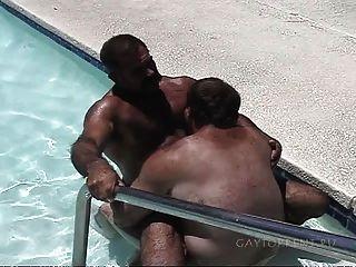 الدببة في حوض السباحة