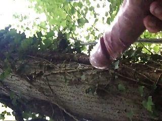 المملكة المتحدة نائب الرئيس ديك كبيرة في الغابة