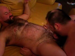 الدببة الشوب على أريكة