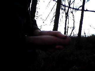 لي في الخشب، إش إم والد