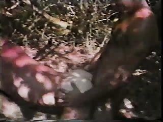 الجنس في الغابة